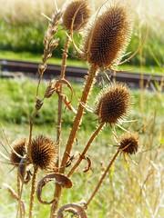 Just a photo of a random bramble. (hall.natasha71) Tags: bramble sunny meadow nature amateurphotography