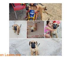 ver foto (Leales.org • tu guía animable) Tags: adopta adoptar adoptanocompres noalmaltratoanimal adopción sebusca extraviado perdido perro gatos lealesorg
