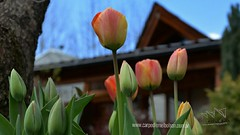 Feliz Primavera !!! . . www.carpediemelbolson.com.ar  @carpediemelbolson @carpediem.cabanasysuites #ElBolsonTodoElAño #TeEstamosEsperando #quieroestarahi #cabañascarpediem #cabañas #alojamiento #turismoelbolson #elbolson #patagoniaargentina #instatrip #vi (Cabañas & Suites) Tags: alojamiento patagonia turismoelbolson travelers bienestar comarca elbolson suites surargentino carpediem rios elbolsontodoelaño vacaciones viviargentina argentina teestamosesperando patagoniaargentina turismoargentina holidays instatrip comarcaandina paisaje quieroestarahi cabañascarpediem lagos turismo cabañas travel montañas