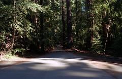 Scan-180919-0012 (alberthuynhphoto) Tags: big basin redwoods redwood state park 35mm fujifilm fuji superia 200 iso film nikon f3