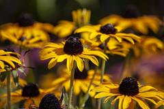 Sheffield Botanical Gardens (Rich Jacques) Tags: sheffield botanicalgardens september 2018 canon eos450d nature flower naturephotography