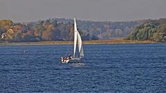 A sailboat in Lake Mälaren in Stockholm (Franz Airiman) Tags: fall autumn höst stockholm sweden scandinavia sjö lake mälaren lakemälaren sail segel sailboat segelbåt