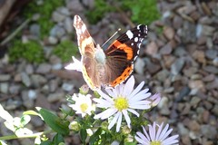 Overbeck's, near Salcombe, Devon (DEE VEE 40) Tags: nationaltrust house garden wildlife butterfly