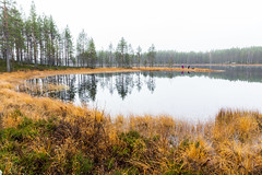 On a morning walk with a dog (VisitLakeland) Tags: finland lakeland aamu autumn calm heijastus järvi lake luonto maisema mirror morning nature outdoor reflection scenery syksy tyyni