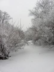 94018191 (aniaerm) Tags: snow ice frost
