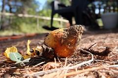Hongos......... 0193.XT (David.gv60) Tags: david60 suelo otoño octubre naturaleza montaña closeup hongos setas mushrooms funji composiciónphotodgv