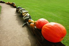 Pumpkin exhibition in the park (Yirka51) Tags: agriculture appetite autumn decoration exhibition exposition farming fall flora food fruit garden grass green meadow meal nature park pumpkin sand path pathway vegetables way wood