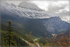 All the way down (Banff NP, Canada) (armxesde) Tags: pentax ricoh k3 canada kanada banff banffnationalpark rockymountains alberta mountain berg schnee snow cirrusmountain tree baum