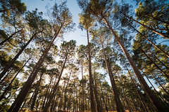Wakening (Stray Toaster) Tags: brownsea island trees 14mm