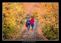 Season of Love (Esmaeel Bagherian) Tags: autumn fall love seasonoflove iran nikond7000 esmaeelbagherian esmaîlbagheriyan colors lovers october mashhad 50mm iranian walking پاییز اسماعیلباقریان ایران خزان عشق نیکون 1397 2018 طبیعت رنگهایپاییزی