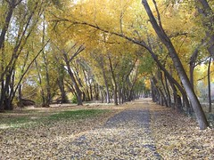 IMG_2817 (August Benjamin) Tags: provo provoriver provorivertrail fall utah mountains provocanyon fallcolors autumn trees leaves orem utahvalley jogging