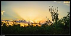 Papago Park, Phoenix, Arizona (Ken Mickel) Tags: arizona clouds cloudscape desert kenmickelphotography landscape landscapedesert ocotillo outdoors papagopark phoenix plants sky sunrays nature photography silhouette silhouettes sunset unitedstates us