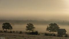 25092018-DSC_0083 (vidjanma) Tags: matin gel brume septembre ardenne