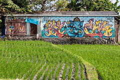 Urban gardening (A Different Perspective) Tags: bali ganesha block blue concrete elephant field graffiti green paddy rice rust shed wall water