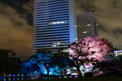 20181124_190047 (gugu800) Tags: 東京都 日本 jp 旧芝離宮恩賜庭園 港区 tokyo minatoku
