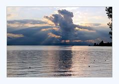 cloud (overthemoon) Tags: switzerland suisse schweiz svizzera romandie vaud territet montreux lake léman lakegeneva lacléman water smooth shiny cloud nightfall dusk twilight sunset waterbirds