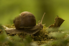 _IMG9980 (andrzejreschke) Tags: insects reptiles plants grass nature butterfly lizard moss flowers beauty beautyofnature