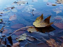 One floating leaf. (Mateusz Medyński) Tags: autumn leaf water yellow blue float nature color colors seasons