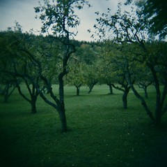 Cold green garden (fromfarbeyond) Tags: moody plastic trees colour analogue 120 toycamera analog autumn color gnarly film holga
