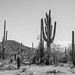 2018 Southwest US-211-Saguaro NP AZ