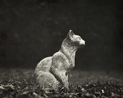 Petrified cat (MoonCCat) Tags: harmandirectpositive speedgraphic aeroektar cat chat miaou vitamine c caffenol