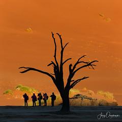Crowd (Jerzy Orzechowski) Tags: grass sossusvlei sand sunrise tree namibia people photographers dunes orange silhuette elitegalleryao bestcapturesaoi