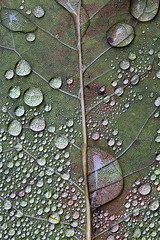 Drips and drops (cheryl.rose83) Tags: raindrops drops water leaf