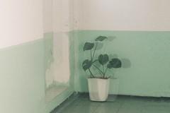 Dizzy (minonimiaa) Tags: green double exposure dizzy indoors film vintage grain plant