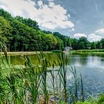 A Summer Pond thumbnail
