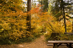 Fall color at the Paradise campground, McKenzie River, Oregon (Bonnie Moreland (free images)) Tags: paradisecampground oregon fall autumn leaves color change trail foliage