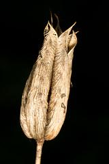 seed head (postcardcv) Tags: canon macro 100l mt24ex autumn seed head
