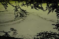 Blick auf die Wasserlinsen auf der Lehmkuhle; Bergenhusen, Stapelholm (10) (Chironius) Tags: stapelholm bergenhusen schleswigholstein deutschland germany allemagne alemania germania германия niemcy teich pond baum bäume tree trees arbre дерево árbol arbres деревья árboles albero árvore ağaç boom träd laub wald forest forêt лес bosque skov las wasser