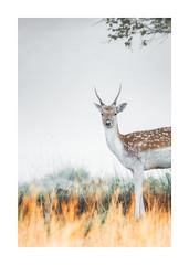 Aware (Vemsteroo) Tags: deer doe reddeer mist fog autumn sunrise morning wildlife nature tree landscape beautiful outdoors canon 7d mkii 100400mm warwickshire charlecote nt nationaltrust