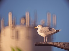 2018:10:01 17:48:42 . Bird Bokeh - Hafen Burgstaaken - Fehmarn - Schleswig-Holstein - Germany (torstenbehrens) Tags: m42f8500mm zhongyi objektiv turbo ii efm43 wecellent m42ef adapter 20181001 174842 bird bokeh hafen burgstaaken fehmarn schleswigholstein germany olympus penf