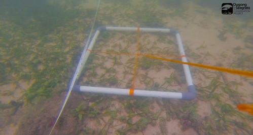 Monitoring Lamun Kobar P2_05