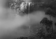 Welcome To The Jungle (Emerald Imaging Photography) Tags: belmorefalls bowral river waterfall bush valley tree trees fog mist robertson nsw newsouthwales sydney australia australian australianlandscape australianbush blackandwhite bw le longexposure