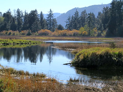 Schumaker Bay Estuary (Shelley Penner) Tags: vancouverisland autumn estuary schumakerbay water mountains trees