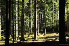 Stimmung im Wald