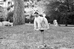 pet-cemetery-memorial (kaumpphoto) Tags: mamiya nc1000s kodak tmax 3200 black white poodle dog pet cemetery garden memorial saintpaul bark
