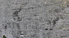 Chemin d'Abel (François Magne) Tags: berger bergère brebis troupeau estive alpage pastoraloup transhumance scene pastorale fz 300 lumix loup couchade minéral sentier