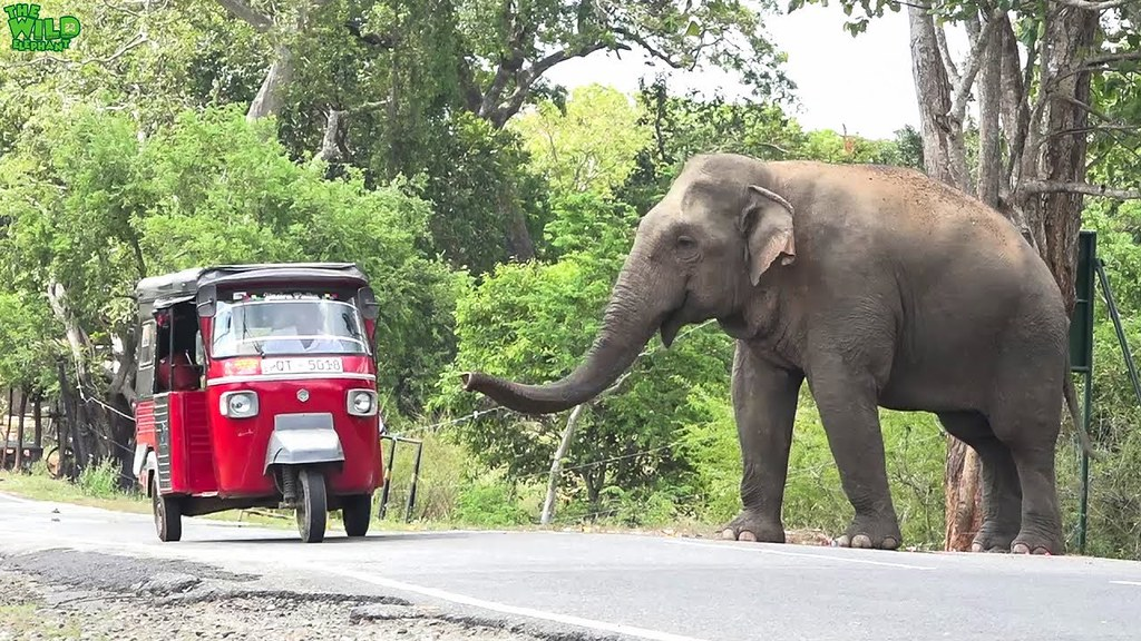 The World's newest photos of elephant and youtube - Flickr