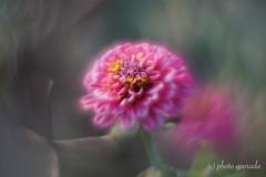 Autumn Beauty (gporada) Tags: macro helios autumn bokeh sonya7ii