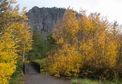 Bridge at Tamarack Lodge (Susan Colosimo) Tags: bridge footbridge twinlakes mammothcreek lodge creek fallcolors2018 fallcolors cloudysky inyonationalforest easternsierranevadamountains easternsierras