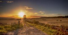 Down the track (xDigital-Dreamsx) Tags: sunlight sky scenery sunset scenic sun sunshine scotland sundown dusk fence track coth coth5 bright outside countryside rural