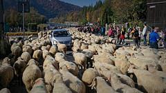Redyk 2018 (lucjanglo) Tags: szczawnica redyk poland europe travel