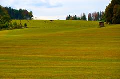Landscape (FailureCriteria) Tags: landscape nature nikon cows gras texture westerwald westerburg