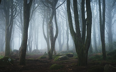Cathedral of the Pines (J C Mills Photography) Tags: portugal sintracascaisnaturalpark sintra forest woodland trees