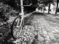 Autumn bike (wketsch) Tags: cologne bike road autumn leaves monochrome black bw iphone street art germany city