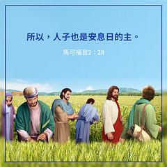 圣经金句-人子是安息日的主 (追逐晨星) Tags: 主耶稣 绿色 草地 门徒