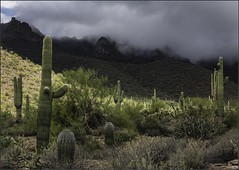 Stand in the Light (chris'pic's51) Tags: clouds mountain superstition arizona cactus saguaro